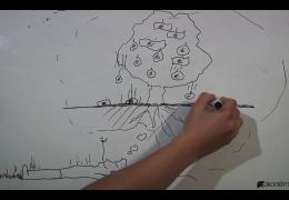 Peňažný strom I. – 3 najčastejšie chyby v budovaní obchodnej siete